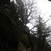 152  G Tree on Trail V