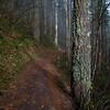 69  G Trail Fog V