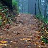 35  G Trail Fog V