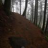47  G Foggy Trail and Trees V