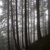 23  G Foggy Trail V
