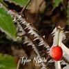 39  G Rime Berry Soft
