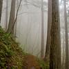 16  G Foggy Trail V