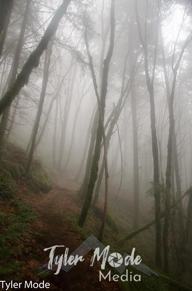 31  Foggy Trail V