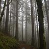 9  G Foggy Trail V