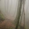 32  G Foggy Trail V