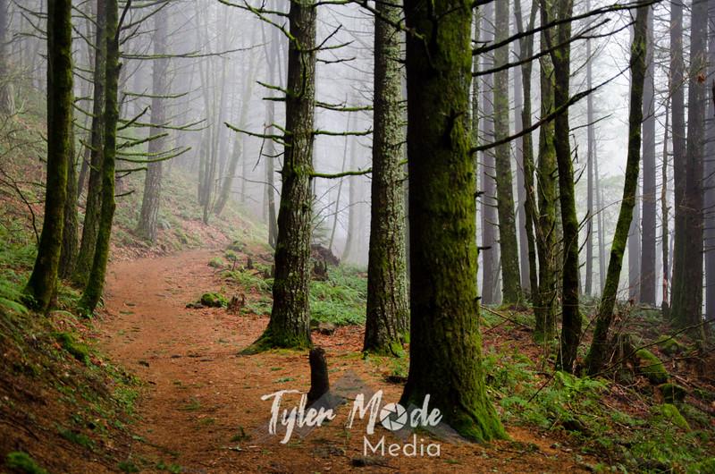 1  G Fog and Trail