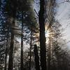 40  G Sun Rays Tree V