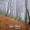 8  G Fog and Trail
