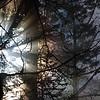 43  G Sun Rays Tree V