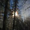 52  G Sun Rays Tree V