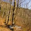 255  G Sunny Trail