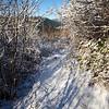179  G Snowy Trail North V