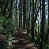 21  G Trail and Shadows V