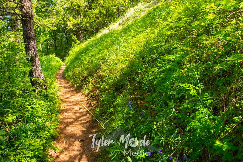 33  G Trail