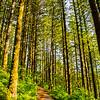 3  G Forest Trail Shadows V