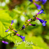 64  G Purple Flowers