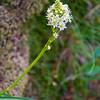 22  G Mini Bear Grass