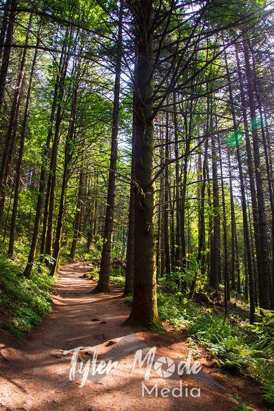 1  G Forest Trail V