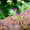 27  G Purple Flower