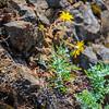 19  G Yellow Succulent V