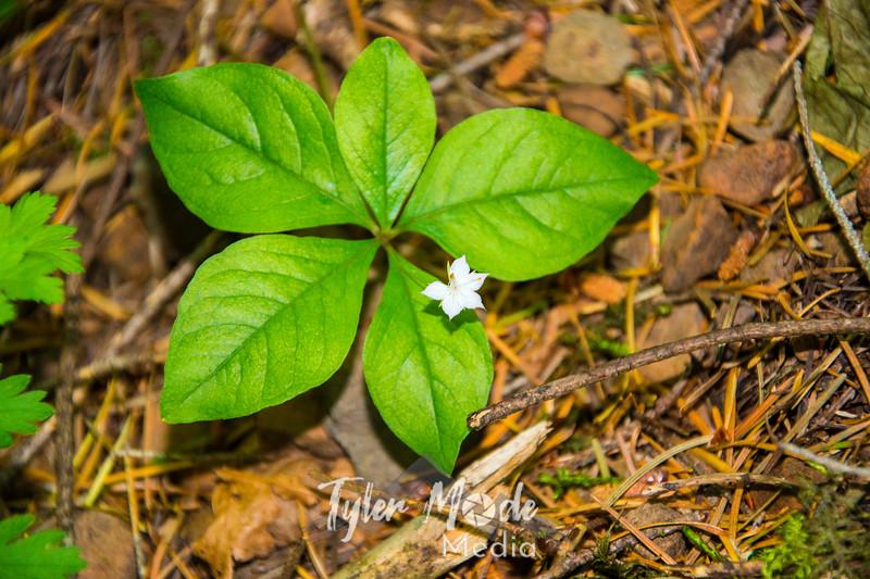 67  G Small White Flower
