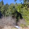 16  G Tree Wind