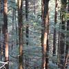 5  G Windy Trees