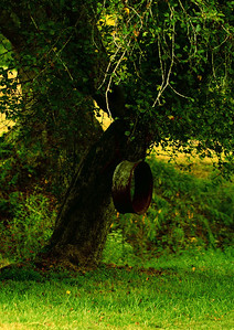 tree springIMG_3698