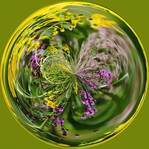 wild flowersIMG_3605 a