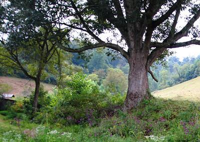 treeIMG_3514 b