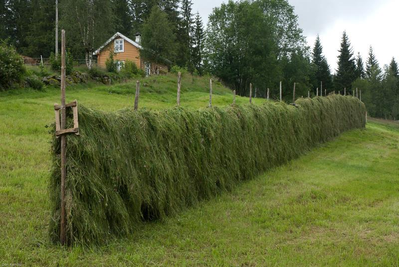 Haukedalen, 31.7.2007