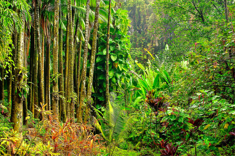 Tropical-Rainforest-Hawaii-Big-Island_DSC9183-SmugMug