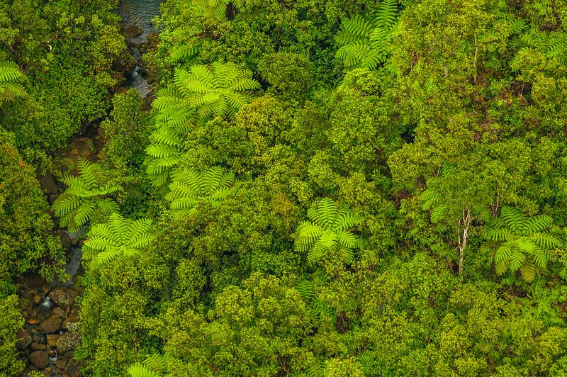 """Looking Down on the Palm Trees"" Napali Coast, Kauai"