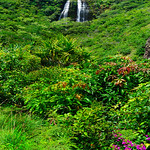 'Opaeka'a_Falls_Kauai_Waterfall_Opaekaa_Hawaii_4576