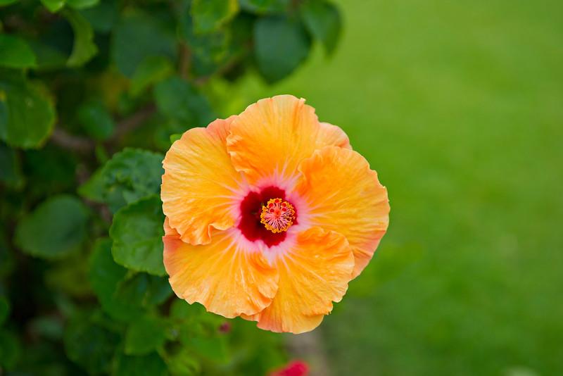 Yellow-Hibiscus-Kauai-Flower-Lei-Grand-Hyatt-Poipu_DSC2529