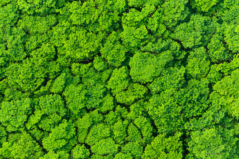 """Tree Tops over Kauai""  Aerial Photograph from a Helicopter of Trees Kauai"