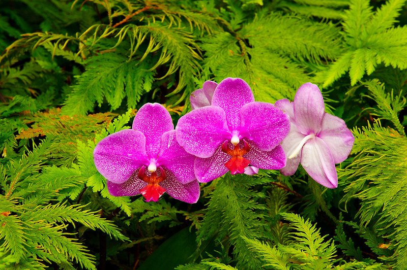 Three-Purple-Flowers-Tropical-Hawaii-Big-Island_DSC9345-Smugmug