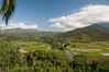 Taro fields in the Hanalei Valley