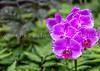 26.  Orchids
