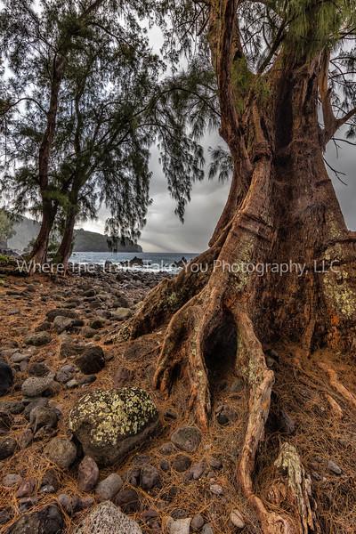 10.  Trees, Rocks, And Ocean