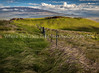 Late Afternoon View Toward Mauna Kea