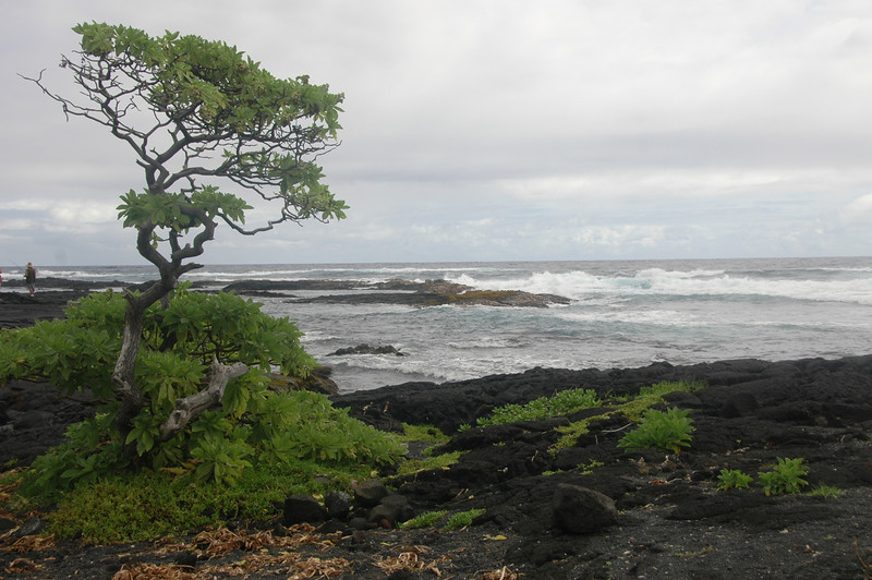 Hawaii-1038