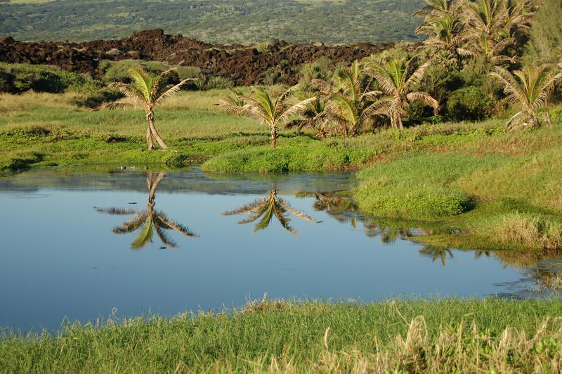 Hawaii-1072
