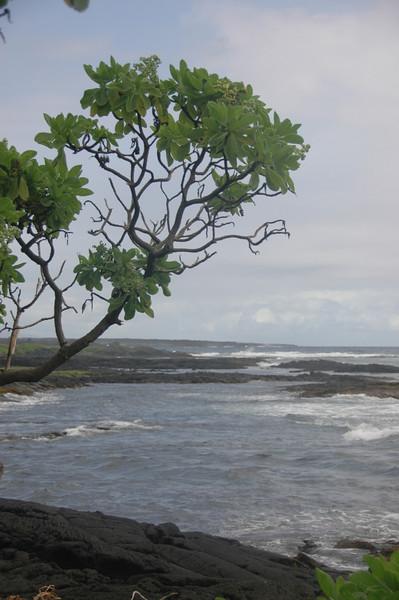Hawaii-1034
