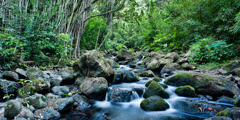 Judd Trail <br /> <br /> Creek meanders through Judd Trail<br /> Oahu, Hawai'i, USA