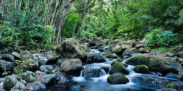 Judd Trail   Creek meanders through Judd Trail Oahu, Hawai'i, USA