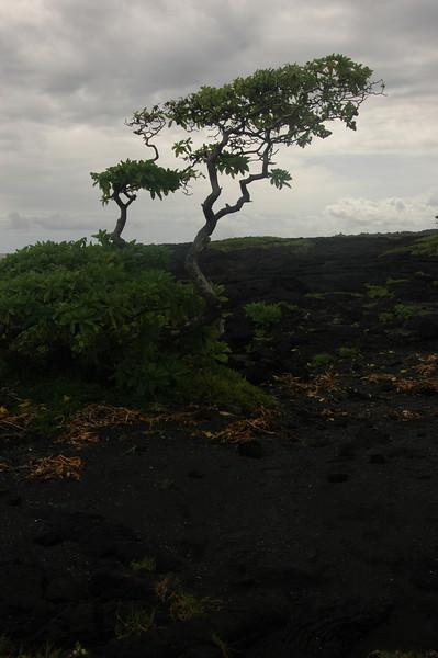 Hawaii-1040