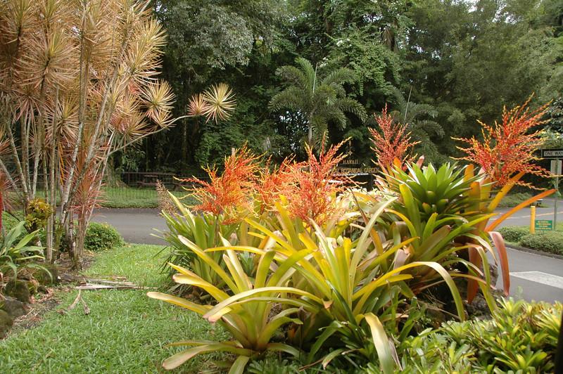 Hawaii-0964