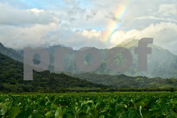 Taro Fields and Rainbow, Kauai, HI
